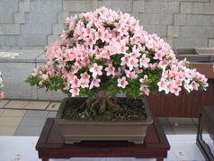 20090529satsuki3